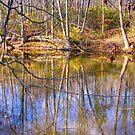Sodalis Nature Park Reflection by David Owens