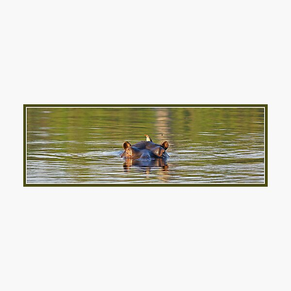 Green hippopotamus Photographic Print