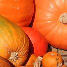 November's Bounty by © Joe  Beasley IPA