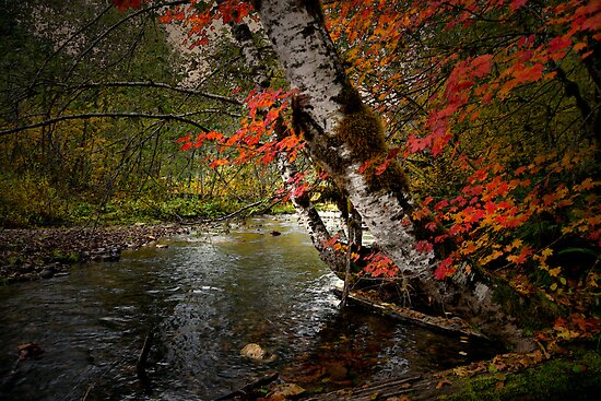 I'll Wait For You by Charles & Patricia   Harkins ~ Picture Oregon