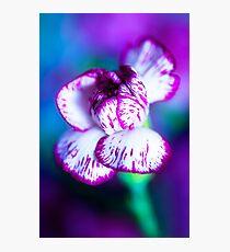 Colour Of Life XII [Print & iPad Case] Photographic Print