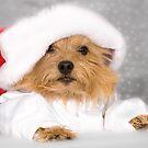 Norwich Terrier Santa Dog by susan stone