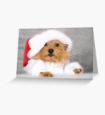 Norwich Terrier Santa Dog Greeting Card