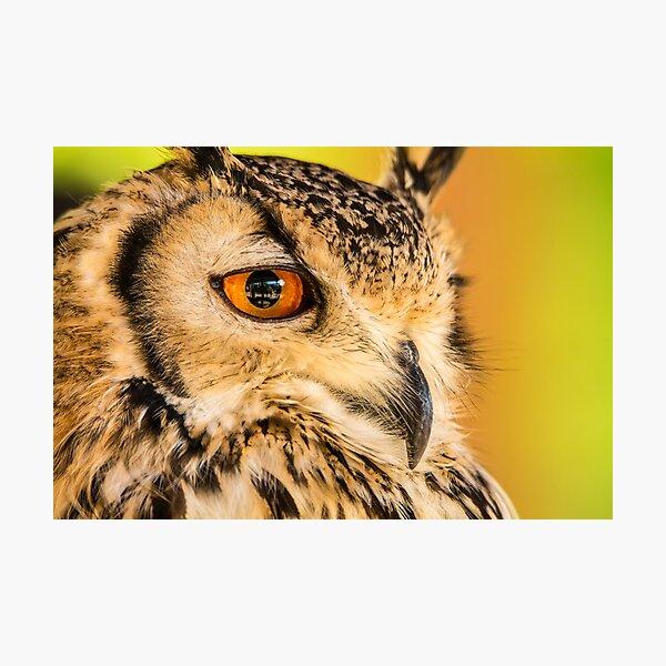 Owls eye Photographic Print