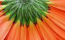 Orange splash by Prasad