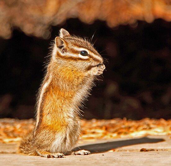 Chipmunk by Keri Harrish