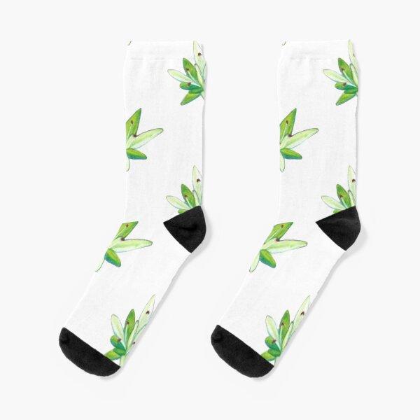 Stonecrop Socks