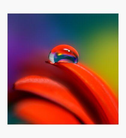 Colour Of Life XXI [Print & iPad Case] Photographic Print