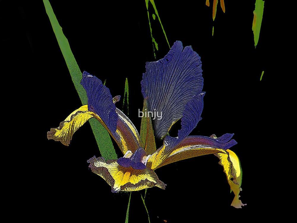 Iris by binjy