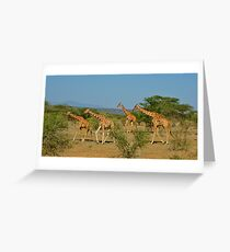 Reticulated Giraffes Greeting Card