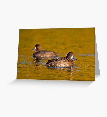 Sunset scaup Greeting Card