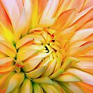 Orange dahlia. by Mundy Hackett