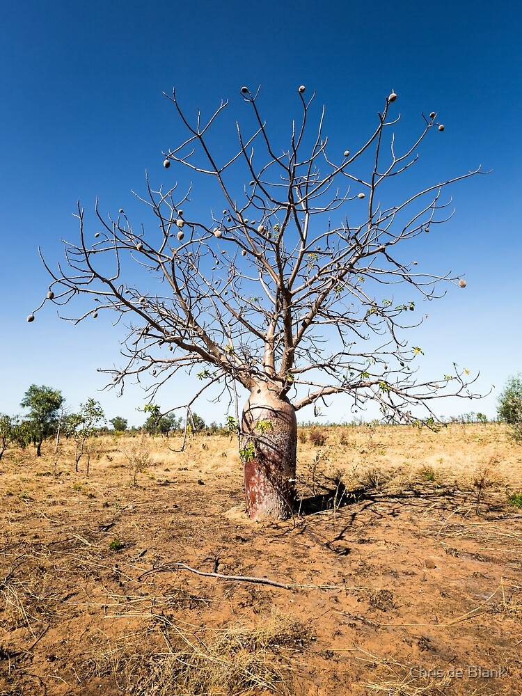 Boab Tree in the Kimberley by Chris de Blank