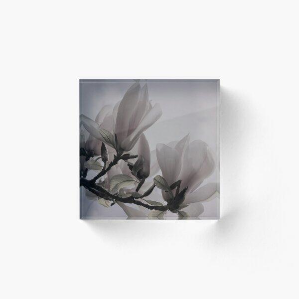 Magnolia flower macro  Acrylic Block