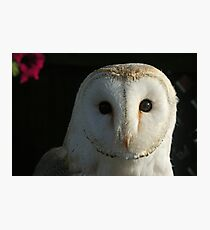 Barn Owl Staring Photographic Print