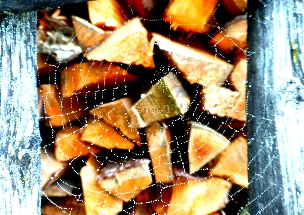 Firewood seen through the spiders web by ©The Creative  Minds