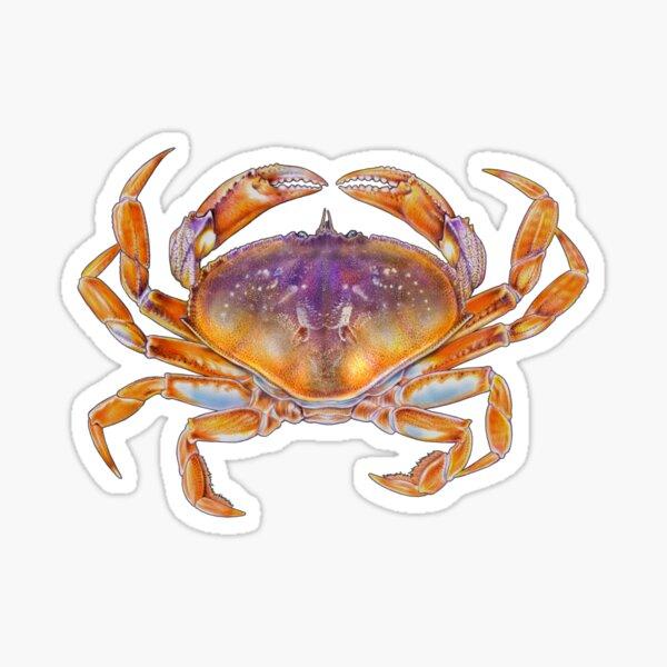 Dungeness crab Sticker