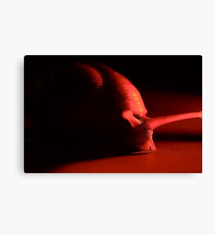 Snail in the Red Canvas Print