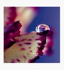 Colour of Life XXXII [square] Photographic Print