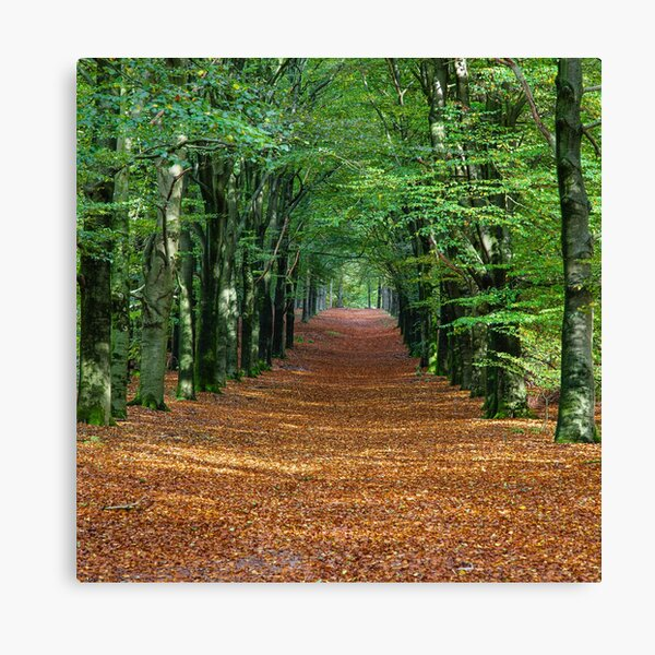 Walking trail in Forest Canvas Print