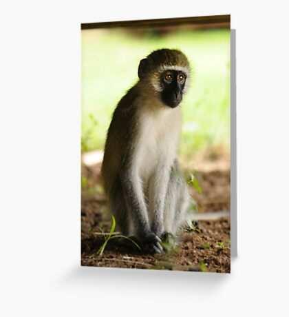 The Stare - Kenyan Monkey Greeting Card