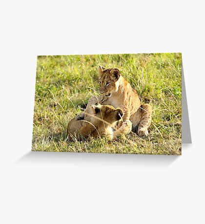 Lion Cubs Wrestling Greeting Card