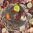Full Circle Fungus by Jordan Selha