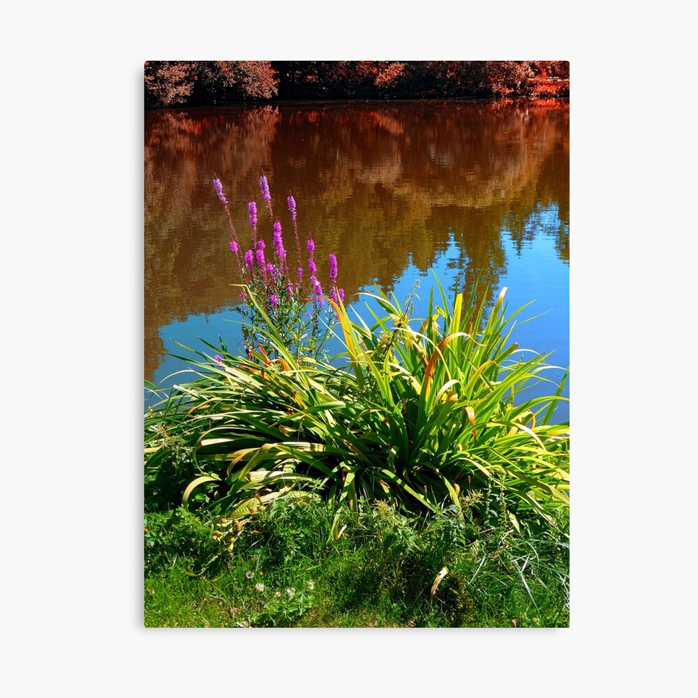 Flowers at the pond Canvas Print