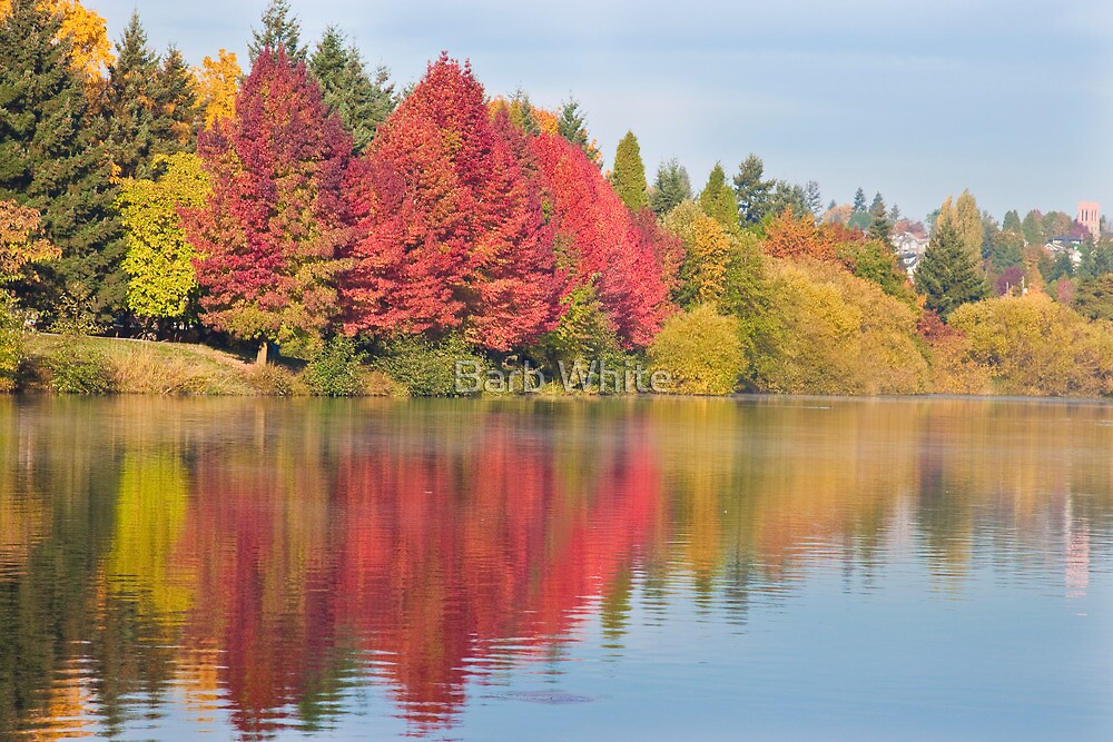 Fall at Green Lake, Seattle, WA by Barb White
