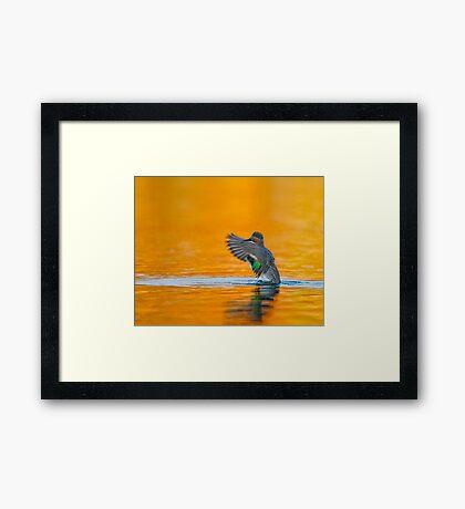 Rising up  Framed Print