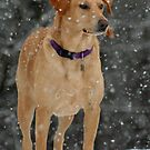 Lab in the Snow by DebbieCHayes