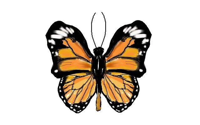 Orange butterfly by senarau