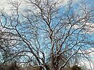 Mulberry Tree in Snow by MotherNature