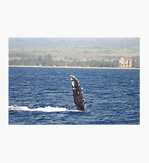 Humpback Whale Pec Fin Photographic Print