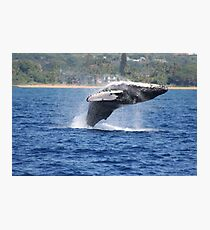 Humpback Breaching - 1 of 3 Photographic Print