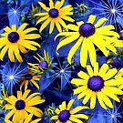 That's Right... Blue Eyed Susans! by Debbie Robbins