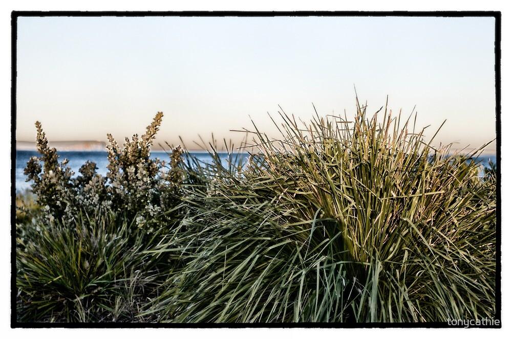 Collingwood Beach 1 by tonycathie