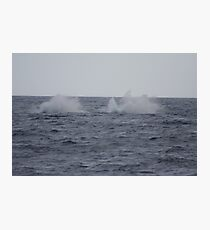 Humpback Twin Breach #4 of 4 Photographic Print