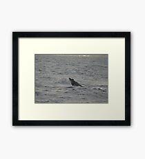Humpback Calf Framed Print