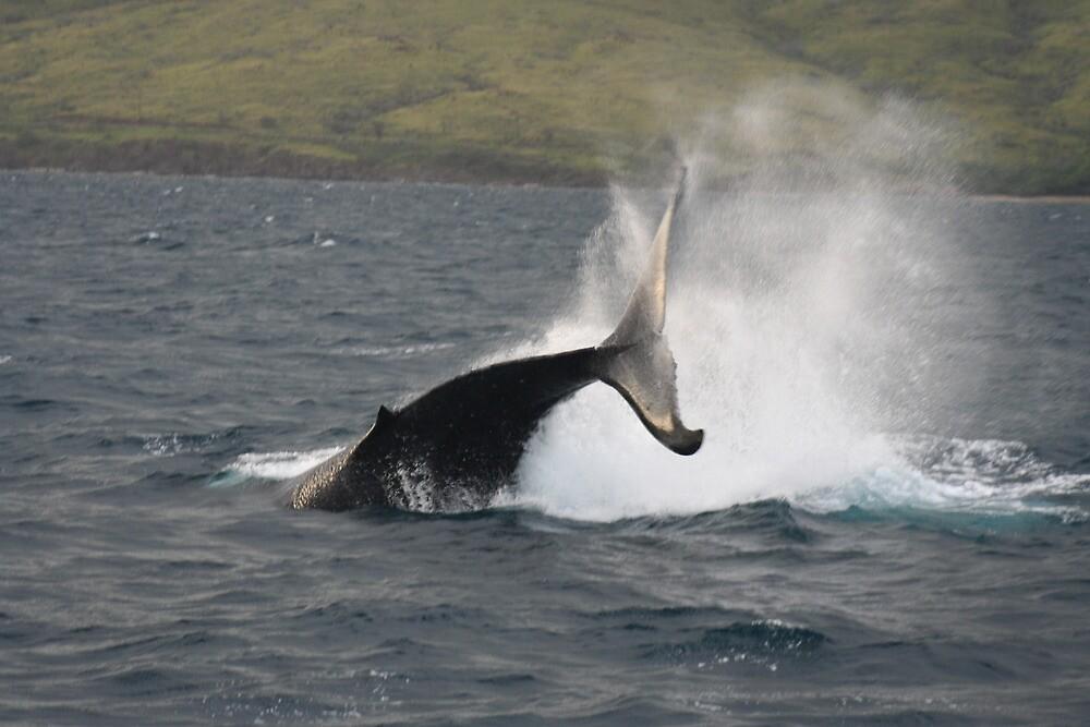 Humpback Whale Peduncle Throw by Katie Grove-Velasquez