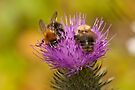 Busy Bees by Ray Clarke