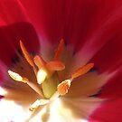 Inner Beauty by Meg Hart