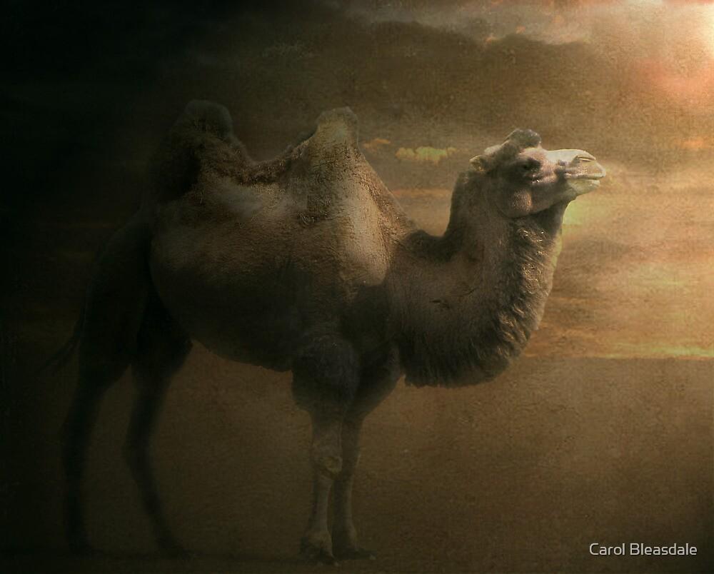 Sandstorm by Carol Bleasdale