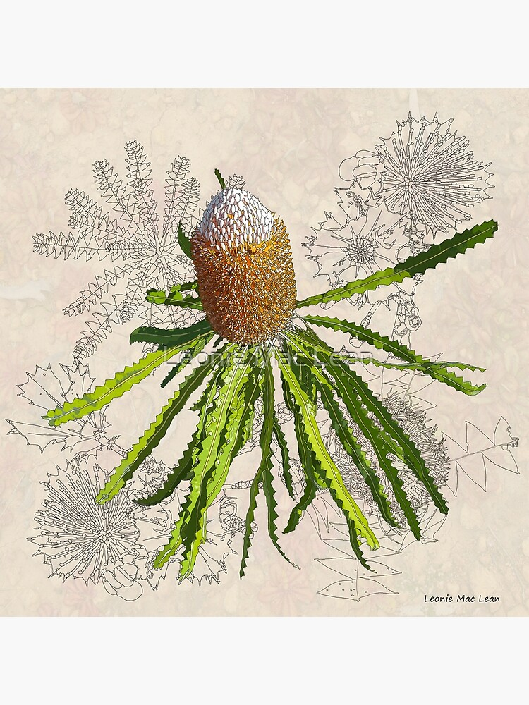 Banksia prionotes Design Mullewa by yallmia