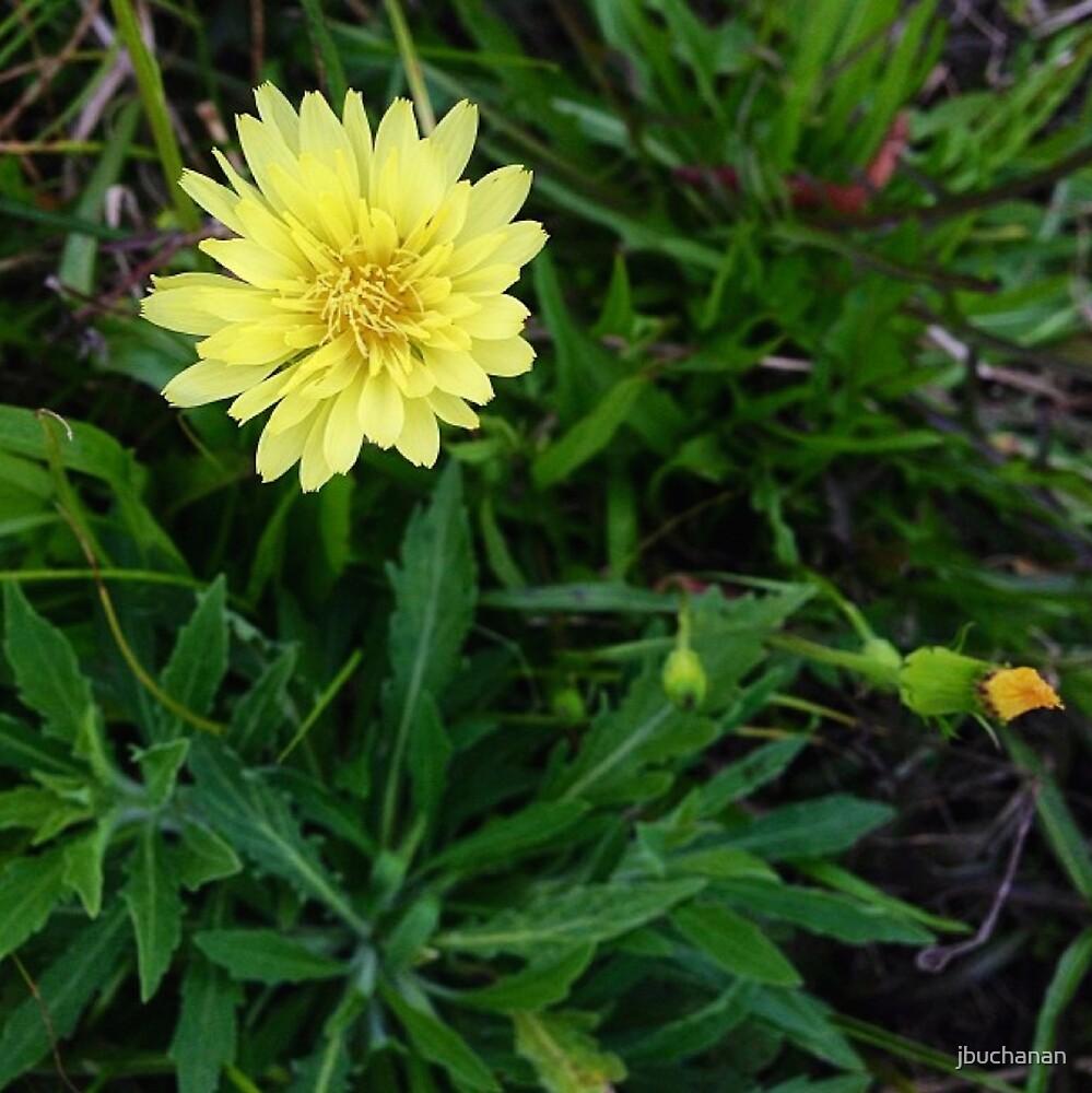 Pale Yellow Flower by jbuchanan