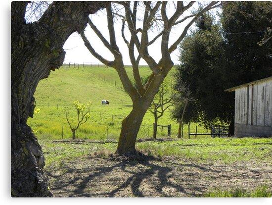 King City Rancho Trees Pasture by Sandra Gray