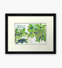 Blueberries from Nova Scotia Framed Print