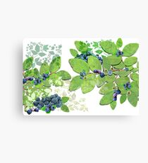 Blueberries from Nova Scotia Canvas Print