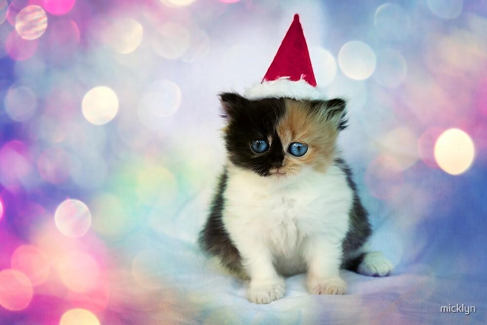 Christmas Kitten by micklyn