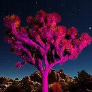 Joshua Tree by Zohar Lindenbaum